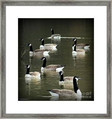 Calm Waters Framed Print by Karen Wiles