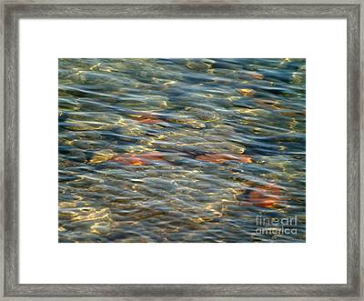 Calming Waters Framed Print