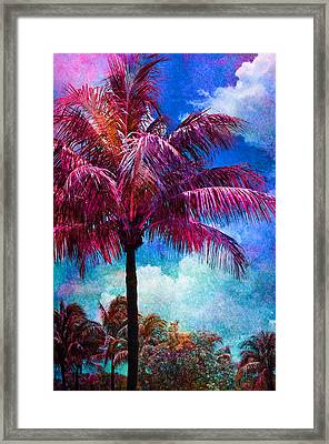 Calypso Framed Print by Laura Fasulo