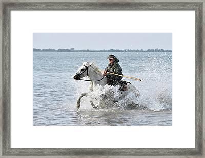 Camargue Cowboy Framed Print by Dr P. Marazzi