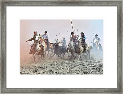 Camargue Cowboys And Bull Framed Print by Dr P. Marazzi