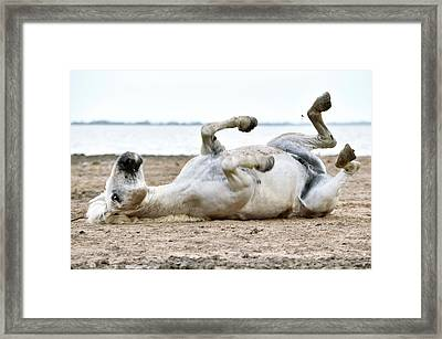 Camargue Horse Framed Print by Dr P. Marazzi