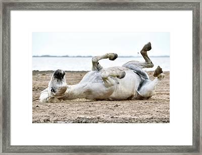 Camargue Horse Framed Print