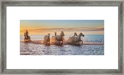 Camargue Horses II Framed Print