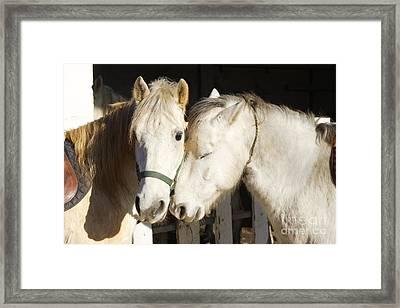Camargue Horses Nuzzling Framed Print