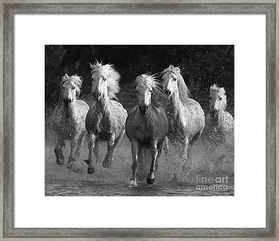 Camargue Horses Running Framed Print by Carol Walker