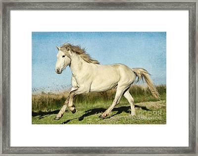 Camargue Stallion Framed Print
