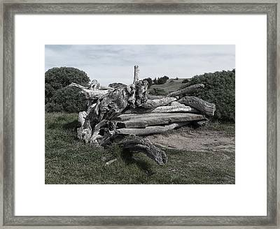 Cambria Driftwood Bench 3 Framed Print