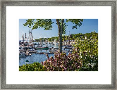 Camden Harbor Spring Framed Print by Susan Cole Kelly