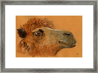 Camel Head Study Framed Print