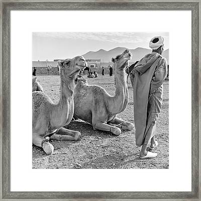 Camel Market, Morocco, 1972 - Travel Photography By David Perry Lawrence Framed Print