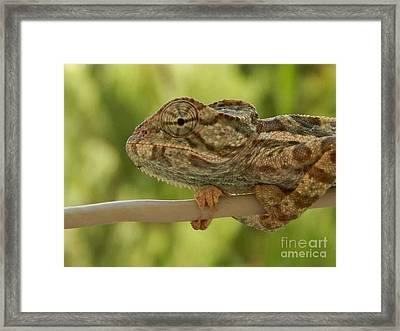 Cameleon Framed Print