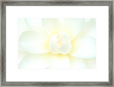 Framed Print featuring the photograph Camelia Flower by Chris Scroggins