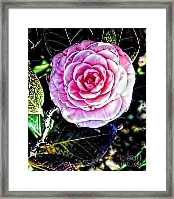 Camellia Alabama State Flower Framed Print by Lesa Fine