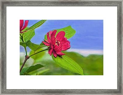 Camellia Framed Print by Marion Johnson