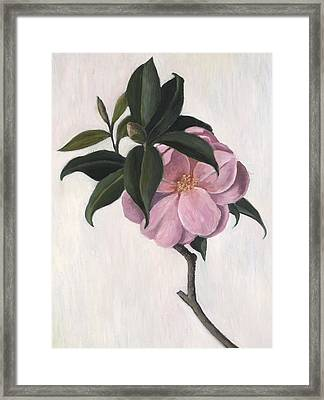 Camellia Framed Print by Ruth Addinall