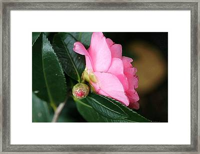 Framed Print featuring the photograph Camellia Side View by Ellen O'Reilly
