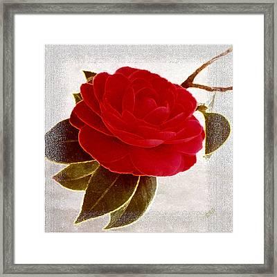 Camellia Spectacular Framed Print by Ben and Raisa Gertsberg
