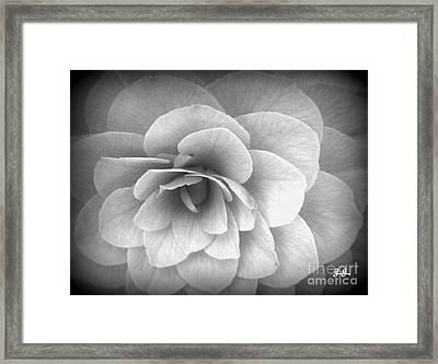Camellia Study Framed Print by Geri Glavis