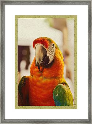Camelot Macaw Framed Print