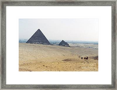 Framed Print featuring the photograph Camels At Giza by Cassandra Buckley
