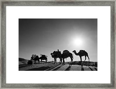 Camels Framed Print by Delphimages Photo Creations