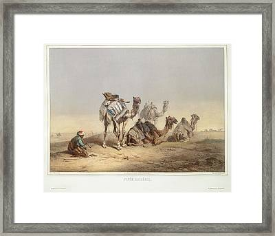 Camels From Cairo Framed Print by British Library