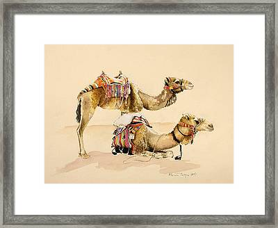 Camels From Petra Framed Print by Alison Cooper