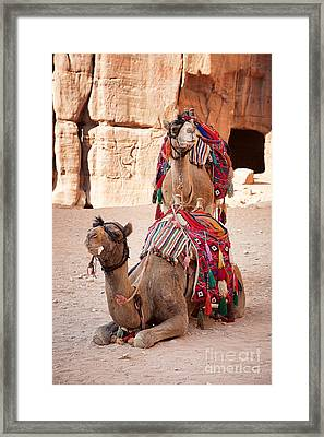 Camels In Petra Framed Print by Jane Rix