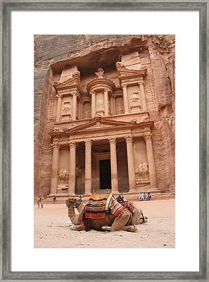 Camels In Petra Framed Print by Rebecca Baker