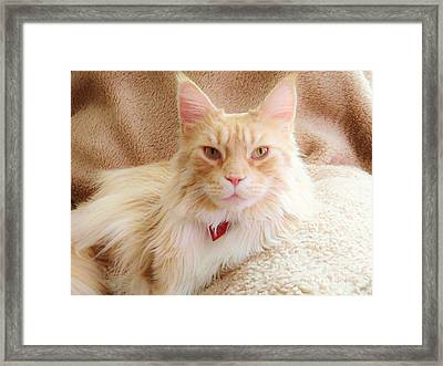 Cameo In Camoflage Framed Print by Judy Via-Wolff