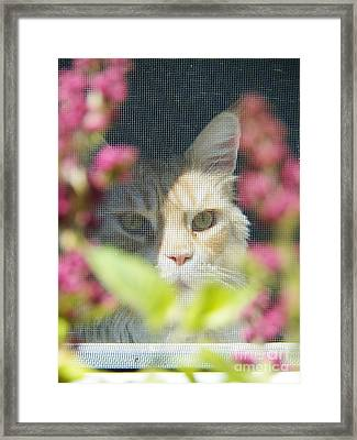 Cameo Peeking Through The Screen Framed Print by Judy Via-Wolff