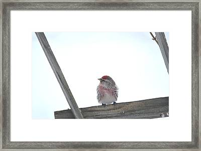 Framed Print featuring the photograph Camera Shy by Dacia Doroff