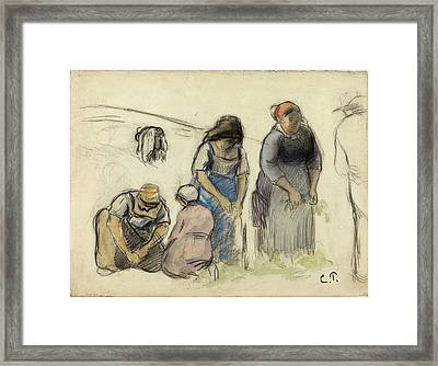 Camille Pissarro, French 1830-1903, Pea Harvesters Recto Framed Print by Litz Collection
