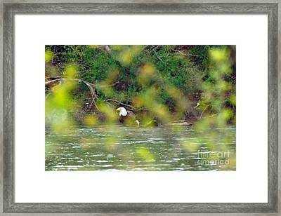 Camoeagle Framed Print by Timothy Connard