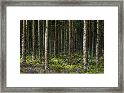 Framed Print featuring the photograph Camore Wood Scotland by Sally Ross