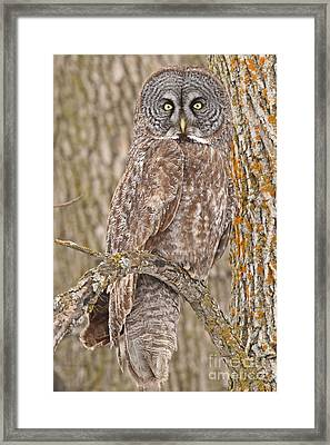 Camouflage-an Owl's Best Friend Framed Print