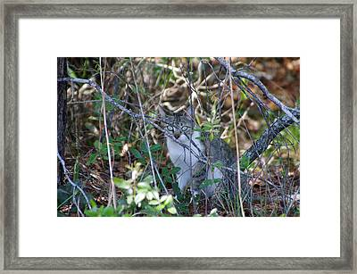 Camouflage Cat Framed Print