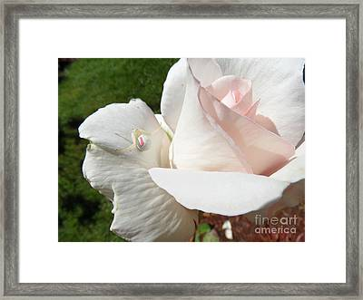 Camouflage Framed Print by Gayle Swigart