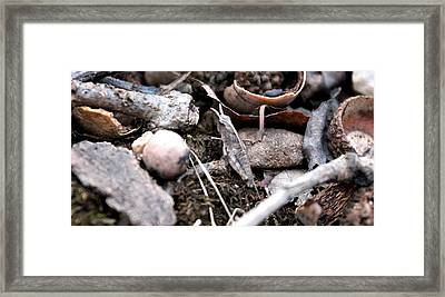 Framed Print featuring the photograph Camouflage Grasshopper by Candice Trimble