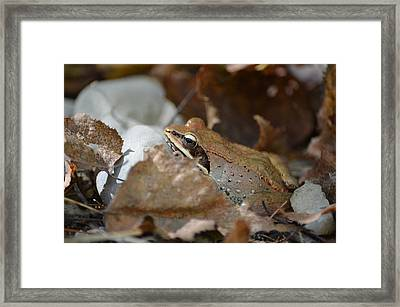 Camouflage Framed Print by James Petersen