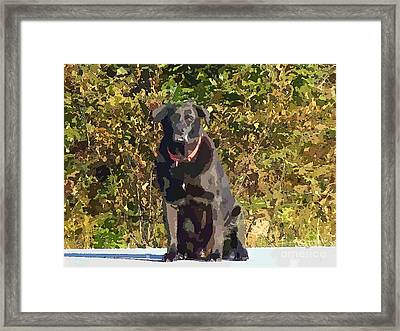 Camouflage Labrador - Black Dog - Retriever Framed Print by Barbara Griffin