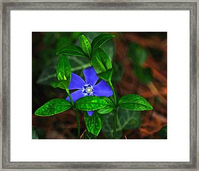 Camouflage Framed Print by Frozen in Time Fine Art Photography
