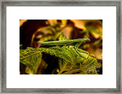 Camouflage Special Framed Print by Robert Bales