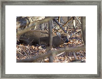 Camouflaged Framed Print by Betsy Knapp