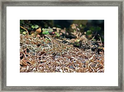 Camouflaged Lizard Framed Print by Cyril Maza