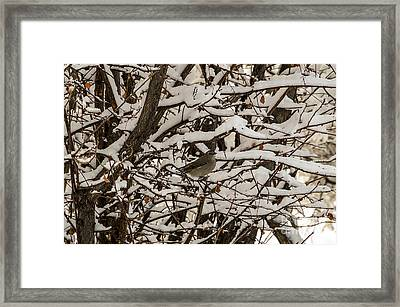 Framed Print featuring the photograph Camouflaged Thrush by Sue Smith