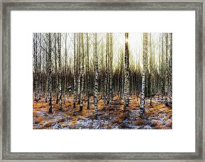 Camouflages Framed Print