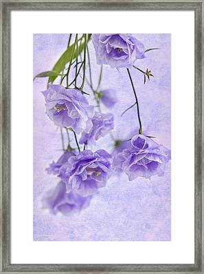 Campanella Blossoms Suspended - Macro Framed Print by Sandra Foster