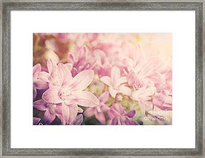 Campanula Floral Background Framed Print